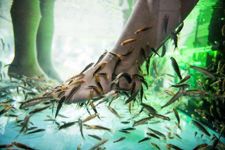 Feet in a fish Spa Standard-Bild