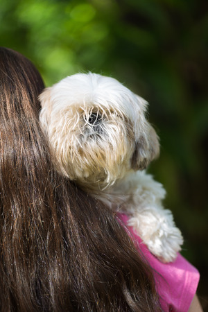 A girl cuddling her pet white Shih Tzu puppy dog over her shoulder on a sunny day.