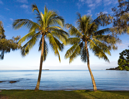Early morning landscape photo with a low horizon, looking through the palm trees to the calm blue waters of Anse Vata Bay, Noumea, New Caledonia. Фото со стока