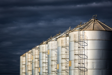 A row of seven round steel silos in afternoon dramatic light.  New South Wales. Фото со стока