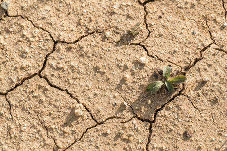 Dry and cracked topsoil in drought-affected farming area. Central Victoria. Archivio Fotografico - 113034711