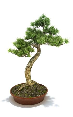 bonsai: Bonsai potted tree isolated on a white background, 3d model. 300 D.P.I Stock Photo