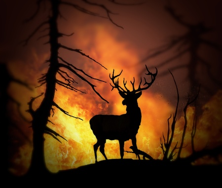 Large elk escaping a wild land fire, 3d model , 300 D.P.I