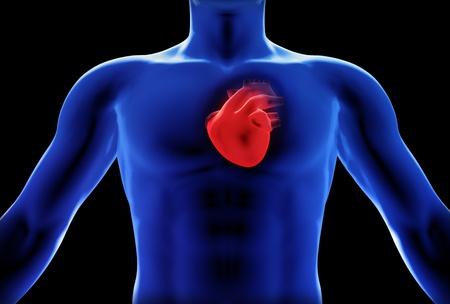 quemadura: Concepto de rayos x del coraz�n humano Foto de archivo
