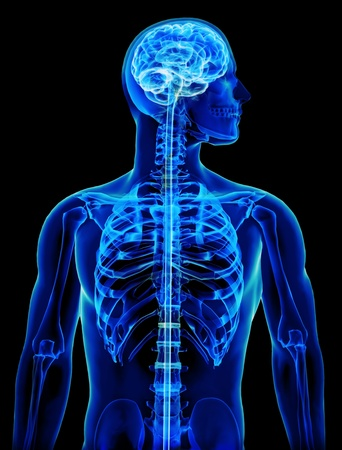 translucent: X-ray with brain and spinal cord concept Stock Photo