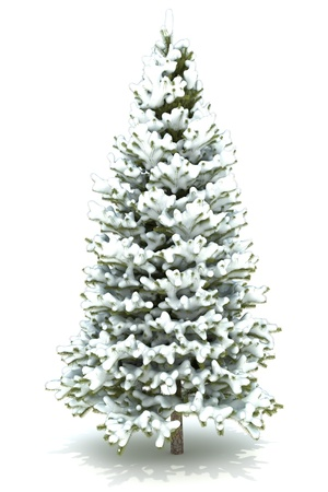 coniferous tree: Christmas tree covered with snow.Isolated on a white background ,Part of a winter tree series 300 D.P.I image  Stock Photo
