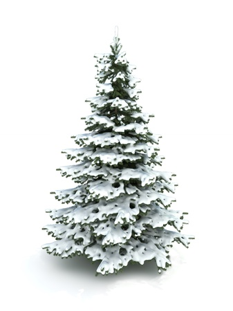 coniferous tree: Spruce tree (Christmas tree) covered with snow.Isolated on a white background ,Part of a winter tree series 300 D.P.I image