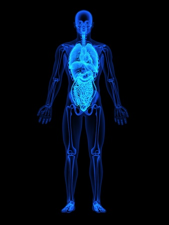 Human xray with focus on mid section internal organs