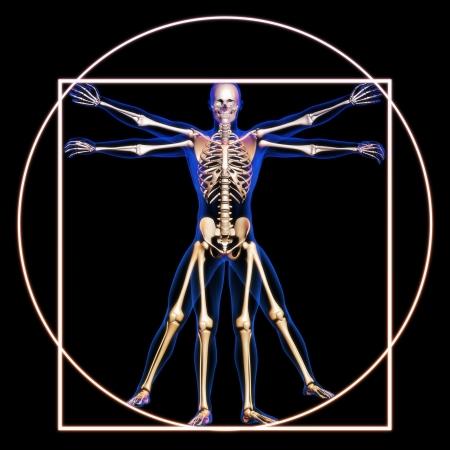 medische kunst: Man van Vitruvius met botten begrip Stockfoto