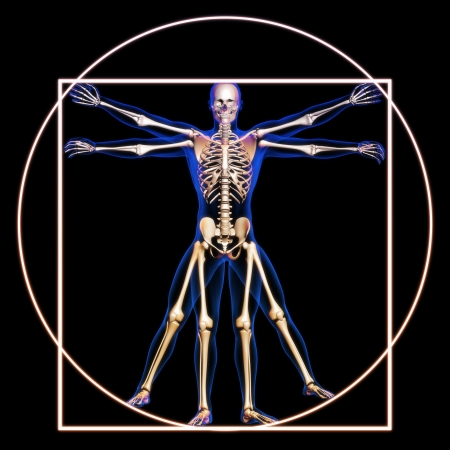 medical field: Vitruvian man with bones concept