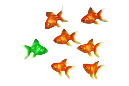 peces de colores: Ser diferente