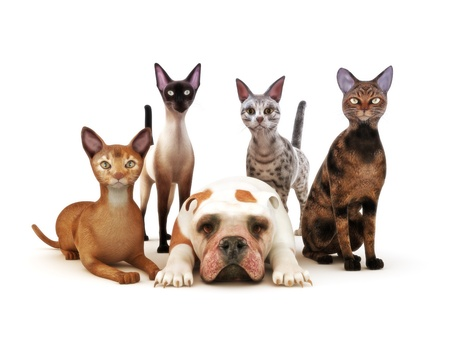 Group of cats posing with one dog white background, Humor, Part of an animal theme series