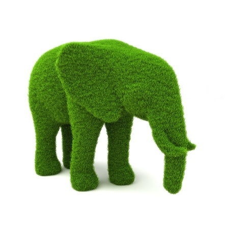 Animal elephant shaped hedge on a white background  Part of an animal theme series