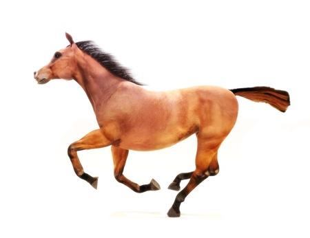 Paard in galop op een witte achtergrond Een deel van een dier thema serie Stockfoto