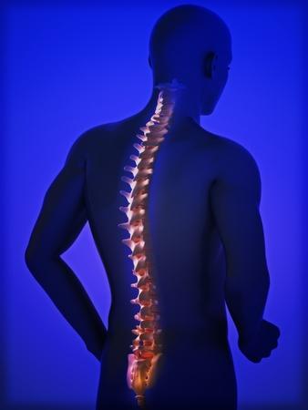 columna vertebral humana: Espina dorsal humana Foto de archivo