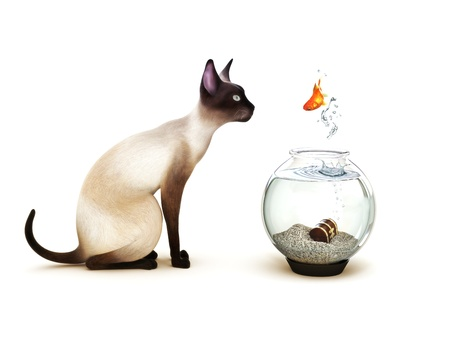 fear: Show no fear, Fish jumping out of a fish bowl in front of a cat  Humor, Part of an animal theme series  Stock Photo