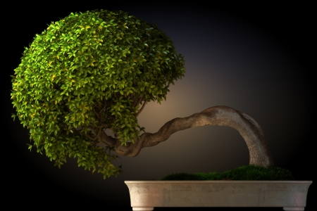 simple flower: Bonsai tree side view with a black color gradient background  Part of a Bonsai series