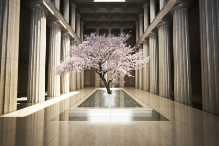 Cherry tree in the interior of a building photo