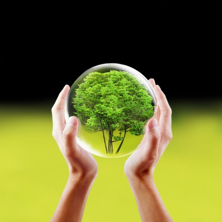 protected tree: Saving nature concept  Hands holding a tree in a protected bubble