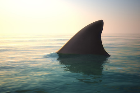 with ocean: Shark fin above ocean water