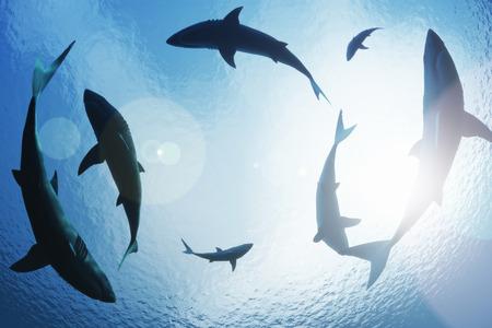 上記からの旋回サメの学校 写真素材