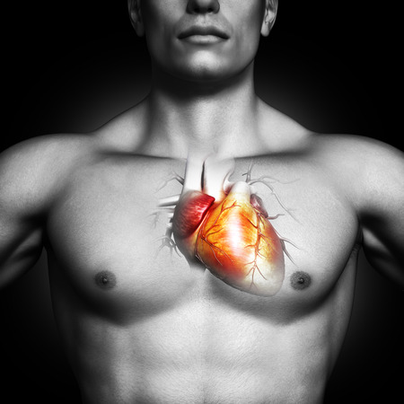 blood circulation: Human heart anatomy illustration of a black and white male on a black background  Part of a medical series