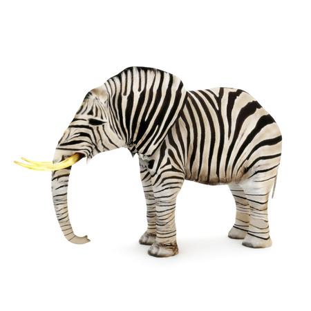 Différente, Éléphant avec des rayures de zèbre sur un fond blanc Banque d'images
