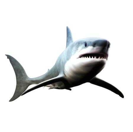 ホオジロザメは、白い背景の上に泳ぐ。 写真素材