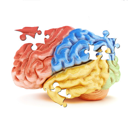 brain puzzle: Learning the Brain. Colored sections of the human brain in the form of puzzle pieces. Stock Photo