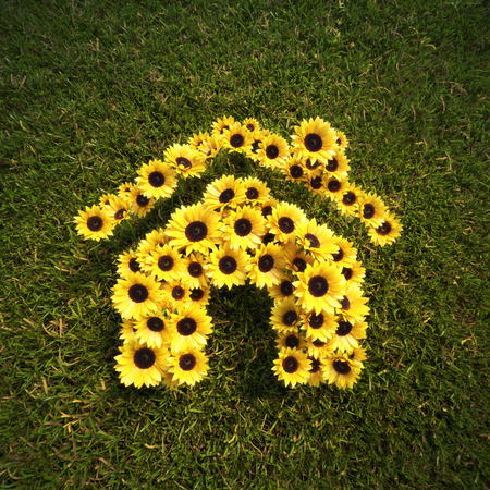spring: Fresh Spring Sunflowers in the shape of a house on a field of lawn grass concept. Stock Photo