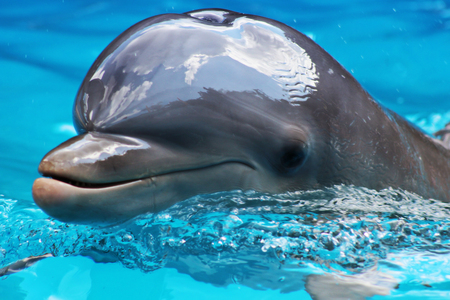 warm water fish: Dolphin close up