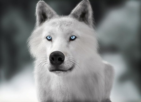 wolf eyes: White wild wolf with blue eyes with blurred depth of field winter background. Photo realistic 3d rendering