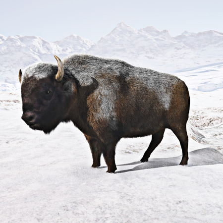 agribusiness: Buffalo (Bison) with a snow covered background. 3d rendering Stock Photo