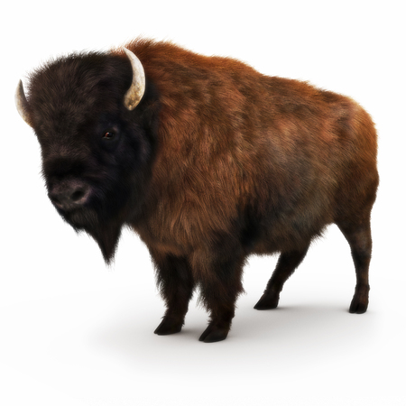American Bison on a white background. 3d rendering