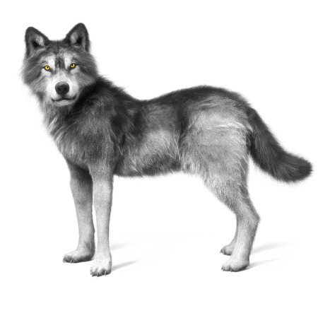 horrific: Grey wolf on a white background . 3d rendering Stock Photo