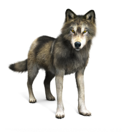 Illustration of a brown wolf on a white background. 3d rendering