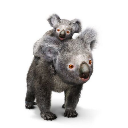 full length herbivore: Koala bear and her baby looking toward the camera on a white background. 3d rendering