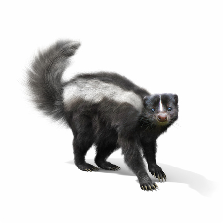Skunk on a white background. 3d rendering