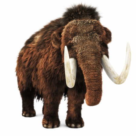 Woolly Mammoth on an isolated white background. 3d rendering Stok Fotoğraf