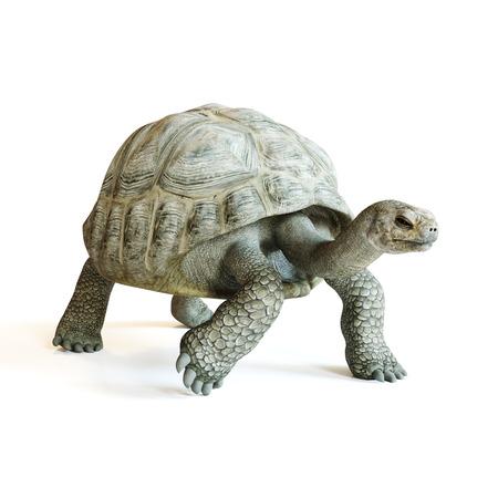 Grote schildpad die op een geïsoleerde witte achtergrond loopt. 3D-rendering