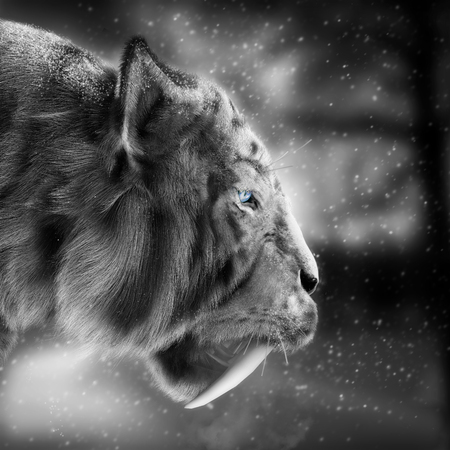 1 person: White tiger stalking its pray with a snowing winter background . 3d rendering