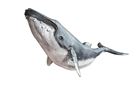 격리 된 흰색 배경에 향유 고래입니다. 3d 렌더링 스톡 콘텐츠