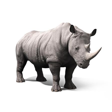Nashorn isoliert auf weißem Hintergrund. 3D-Rendering Lizenzfreie Bilder
