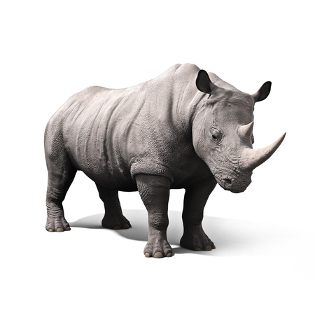 grey: Rhinoceros isolated on a white background. 3d rendering Stock Photo