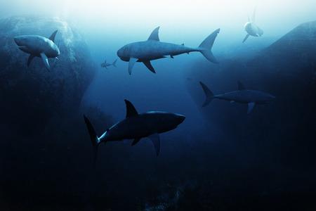 patrolling: Shark encounter,Large school of sharks patrolling underwater. 3d rendering illustration Stock Photo