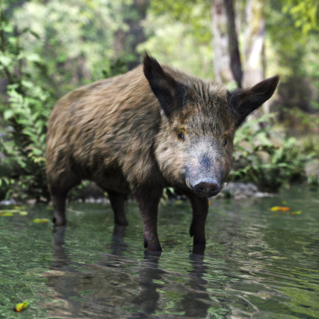 Wild boar in its natural habitat . 3d rendering