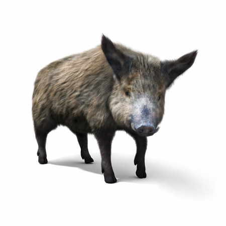 view: Wild boar isolated on a white background. 3d rendering