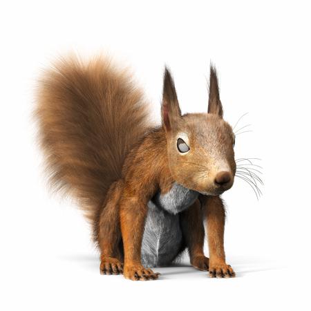 Red Eichhörnchen oder eurasischen roten Eichhörnchen, Blick in die Kamera, stehend auf einem isolierten weißen Hintergrund. 3D-Rendering Lizenzfreie Bilder