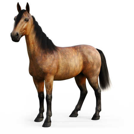 Bay horse on a white background. 3d rendering Stock Photo