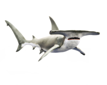 Hammerhead shark swimming on a white isolated background. 3d rendering
